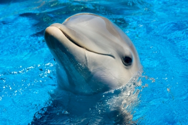 cute-dolphin